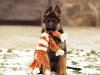 Нужны ли игрушки для собак?